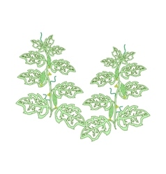 Cucumber plants with leaves flowers and cucumbers vector
