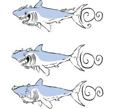 Three great white sharks vector