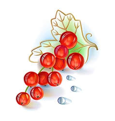 Red currant bunch with leaf and dew drops vector