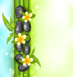 Spa therapy background with bamboo stones and vector