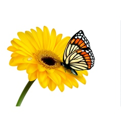Nature summer yellow flower with butterfly vector