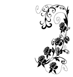 Black roses vector