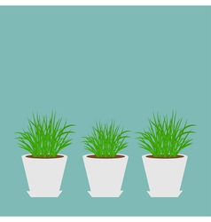 Three pots with growing grass icon set blue vector