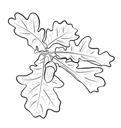 Acorn with the oak branch vector