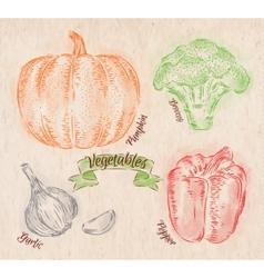 Vegetables pepper pumpkin garlic broccoli country vector