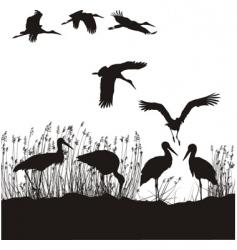 Storks in peat vector