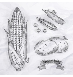 Vegetables corn peas potatoes vintage vector