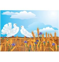 Couple of white pigeons vector