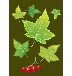 Berries and currant leaves vector
