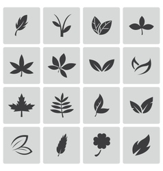 Black leaf icons set vector