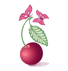 Cherry and butterfly vector