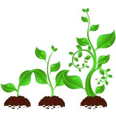 Plant growth vector