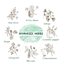 Ayurvedic herbs collection vector