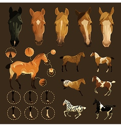 Horse markings vector
