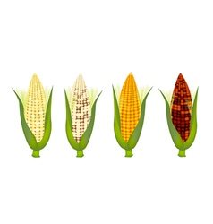 Four colors of fresh corn with husk and silk vector