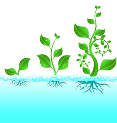 Water plant growth vector