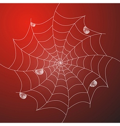 Abstract white cobweb with rain drops on red vector