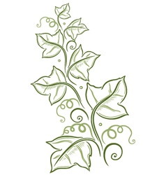 Green leaves tendril vector