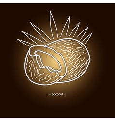 Image coconut in the contours vector
