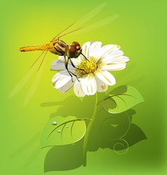 Dragonfly on white flower vector