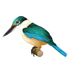 Sacred kingfisher vector