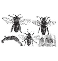 Bee vintage engraving vector