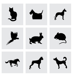 Black pet icons set vector