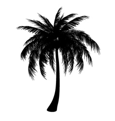 Silhouette of palm vector