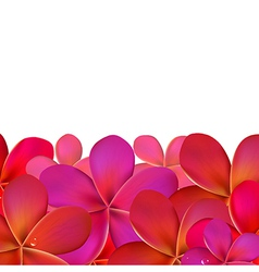 Pink frangipani with border vector