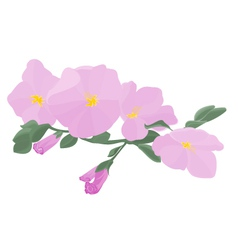 Orchid stem with flowers vector