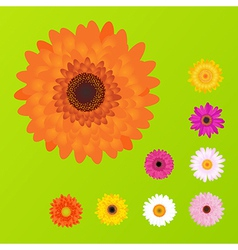 Colourful daisies vector
