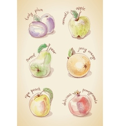 Vintage set of fruits vector
