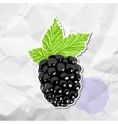 Ripe blackberry vector