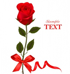 Beauty red rose with ribbons vector