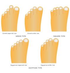 Toe shape vector