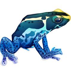 Poison dart frog vector