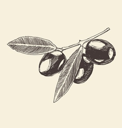 Olive branch olive tree branches vintage vector