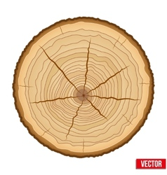 Cross section of tree trunk vector
