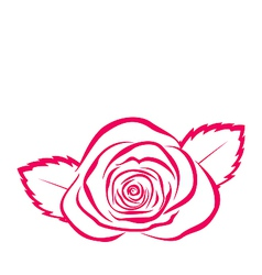 Rose hand drawen style isolated on white vector