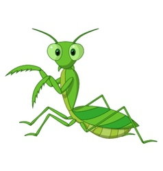Cute praying mantis cartoon vector