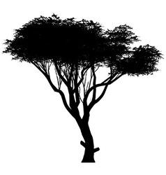 Acacia vector