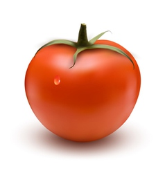 Fresh tomato vector