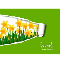 Daffodil background vector