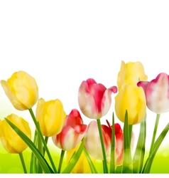 Fresh tulips isolated on white eps 10 vector