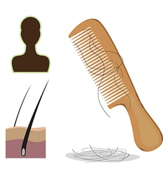 Hair loss vector