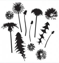 Dandelion silhouettes vector
