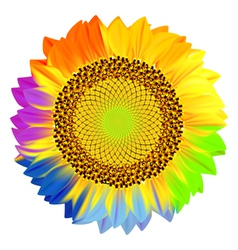 Sunflower with rainbow petals vector