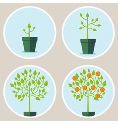 Growth concept vector