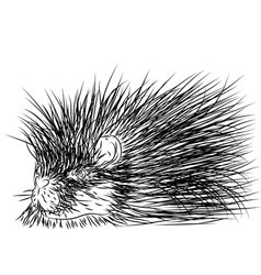 Porcupine vector