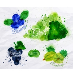 Fruit watercolor blueberry grapes currants black vector